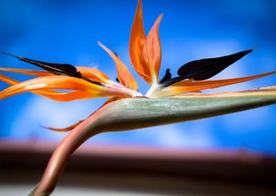 Little Big Picture - Naturfotografie - 15